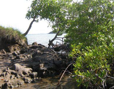 La situation réelle en Martinique : témoignage local